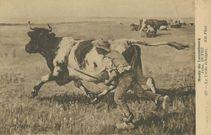 La Vache échappée | Dupre J.