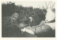 Gaston TOURAINE présente un coq &quot | Joux Eric