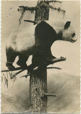 PANDA GEANT |