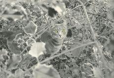 APREMONT dans les bois. | Kervinio Yvon
