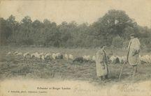 Echassier et Berger Landais |