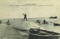 Baleine capturée par des marins à l'entrée du bassin |
