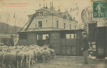 Embarquement de Moutons |
