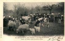 Renneveux, près Vannes - Visite au bétail entre les deux repas |