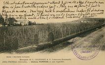 VENDANGES DE 1902 AU DOMAINE DE BICO (HAUT-FRONSAC) |