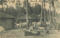 A Bengal Village Scene |