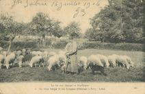 Le vieux berger et son troupeau |