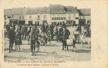 Les Chèvres du Syndicat florenvillois se rendant au Concours régional d'Arlon |