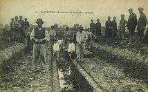 Extraction de la tourbe : coupage   Joubier J.-B.