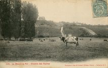 Chemin des Vaches  