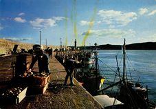 Le Port à l'arrivée des Coquillers |