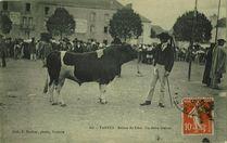 Un élève breton | Decker F.