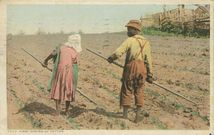 FIRST HOEING OF COTTON |
