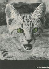 Les chats | Kervinio Yvon