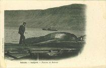 Fanons de baleine |