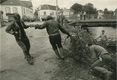 Abattage des arbres en bordure du Blavet au pont de Lochrist, 8/1985 | Kervinio Yvon