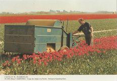 Coupe des tulipes à a Torche | Kervinio Yvon