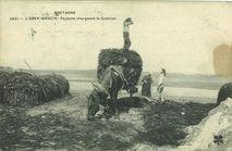 Paysans chargeant le goémon |