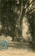 Le Gros Tilleul, 14 mètres de circonférence  