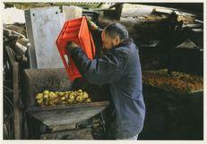 Henri MOELLO de Caudan (56) fait son cidre - 2010 1/2 | Kervinio Yvon
