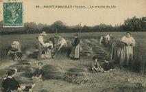 La récolte du lin