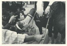 CONCOURS REGIONAL DU CHEVAL BRETON: LES ENFANTS DECOUVRENT LES CHEVAUX 1988 | Kervinio Yvon