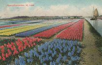Hiacinthenvelden bij Lisse |