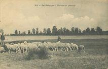 Moutons au pâturage |