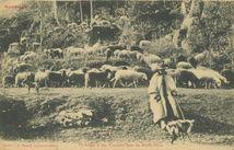 Un Berger et son Troupeau dans les Monts-Dores  