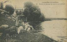 Moutons au pâturage aux bords du lac d'AYDAT  