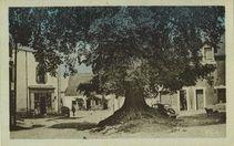 L'Arbre de la Liberté planté en 1792 |