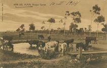 MAR DEL PLATA, Arroya Camet  