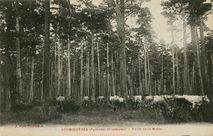 Forêt de la Matte |