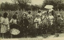 Cueillette des Fleurs Pectorales par les Tout Petits |