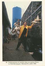 Embarquement des poulets dans un camion Doux, Le Petit-Kermaquer, Melrand-56, juillet 1988 | Kervinio Yvon