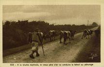 A la brume matinale, le vieux père s'en va conduire le bétail au pâturage |