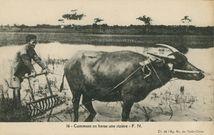 Vietnam | Ag. EC.