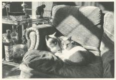 MIKADO et SOUMAYA 1984 | Kervinio Yvon