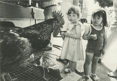 Le coq et les fillettes | Kervinio Yvon